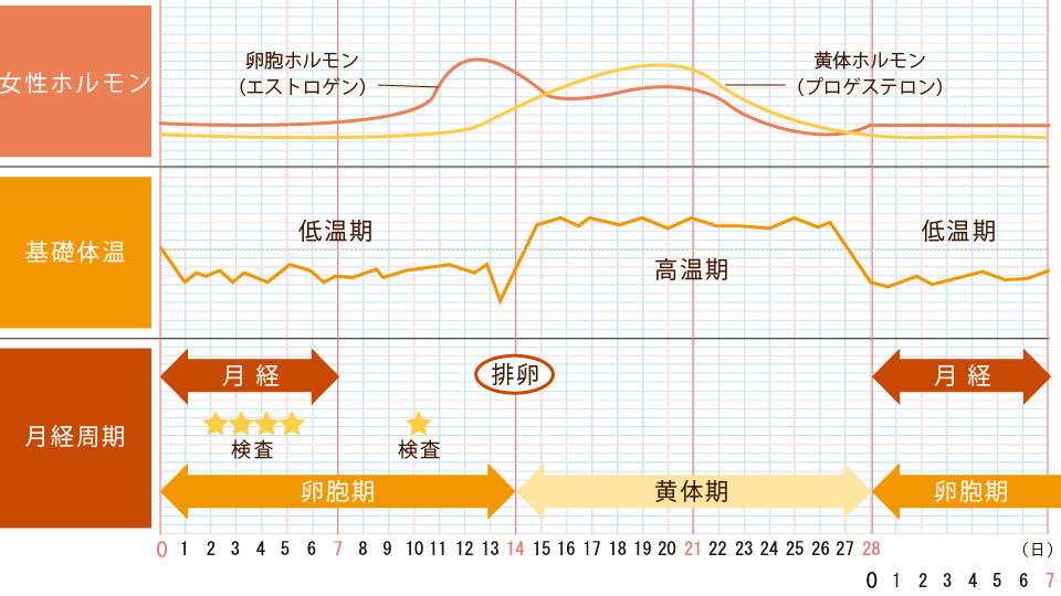 検査スケジュールチャート画像